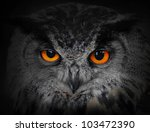 The Evil Eyes.   Eagle Owl ...