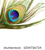 carnival peacock feathers.  | Shutterstock . vector #1034736724