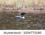 common loon on wavey lake with... | Shutterstock . vector #1034773180