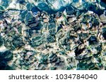 seabed with rocks and seaweed... | Shutterstock . vector #1034784040