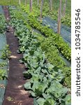Large Vegetable Garden With...