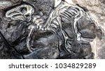 Fossil Of Caudipteryx The...