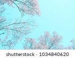 beautiful sakura flowers in... | Shutterstock . vector #1034840620