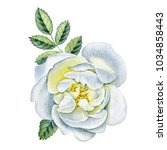 watercolor hand painted rose.  | Shutterstock . vector #1034858443