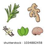 ginger  rosemary  vanilla  mint....   Shutterstock .eps vector #1034882458