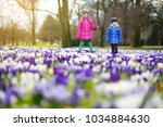 two little sisters picking... | Shutterstock . vector #1034884630
