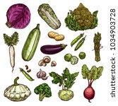 vegetables set of potato ... | Shutterstock .eps vector #1034903728