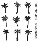 set of black palm icons...   Shutterstock .eps vector #1034907808