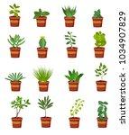vector set of green plants in... | Shutterstock .eps vector #1034907829