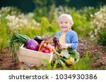 cute little boy holding fresh... | Shutterstock . vector #1034930386