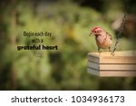 bird perched on a feeder with a ... | Shutterstock . vector #1034936173