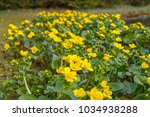 spring background with yellow ... | Shutterstock . vector #1034938288