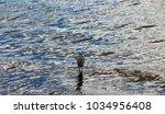 a beautiful graceful white...   Shutterstock . vector #1034956408