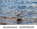 a beautiful graceful white...   Shutterstock . vector #1034956420