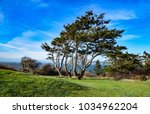 Small photo of A twisted tree graces the top of the cliff at Casey State Park on Whidbey Island in Washington.