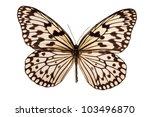 Stock photo idea leuconoe butterfly isolated on white background 103496870