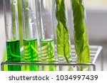 science research leaves of... | Shutterstock . vector #1034997439