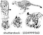 vector drawings sketches... | Shutterstock .eps vector #1034999560