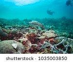 hawksbill turtle swimming on a... | Shutterstock . vector #1035003850