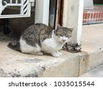 Small photo of An alley cat