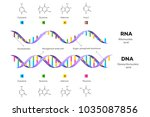 molecular structure of dna and... | Shutterstock .eps vector #1035087856