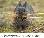 a female rabbit collecting... | Shutterstock . vector #1035112300