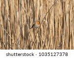 robin bird erithacus rubecula | Shutterstock . vector #1035127378