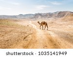 Two Camels Crossing Desert Road ...