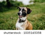 Small photo of Happy playful frisky fast and furious puppy enjoying freedom at nature. Mad crazy funny cheerful lovely little dog running and jumping outdoor. Restless domestic pet playing. Glad active aminal