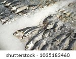 frozen raw sea fish on crushed...   Shutterstock . vector #1035183460
