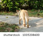 tabby cat walking away with a... | Shutterstock . vector #1035208600