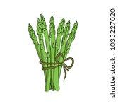 vector color green asparagus... | Shutterstock .eps vector #1035227020