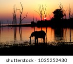Elephant Silhouette At The Lak...