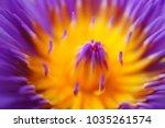 Macro Of Beautiful Purple...