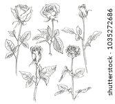 vector set of roses on a white... | Shutterstock .eps vector #1035272686