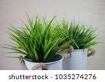 long blades of green grass... | Shutterstock . vector #1035274276
