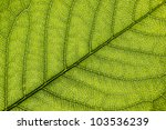 green leaf close up background. ... | Shutterstock . vector #103536239