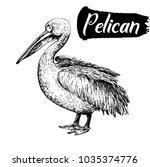 hand drawn sketch style pelican.... | Shutterstock .eps vector #1035374776