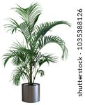 decorative areca palm tree... | Shutterstock . vector #1035388126