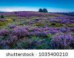 posbank national park veluwe ...   Shutterstock . vector #1035400210