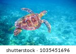 sea turtle in clear blue sea... | Shutterstock . vector #1035451696
