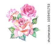watercolor pink roses with... | Shutterstock . vector #1035451753