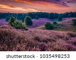 posbank national park veluwe ... | Shutterstock . vector #1035498253