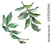 ash leaves in a watercolor... | Shutterstock . vector #1035502960