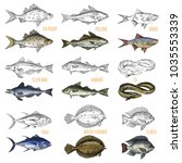 sketches of ocean fish species. ... | Shutterstock .eps vector #1035553339