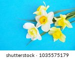 yellow white daffodil ... | Shutterstock . vector #1035575179