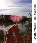 Small photo of Beautiful pink silk flower with a natural background. (Albizia julibrissin)