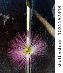 Small photo of Arrangement of a Albizia julibrissin (Persian silk tree, pink silk tree) flower on a wooden table.