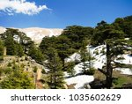 lebanese cedars at the arz ar... | Shutterstock . vector #1035602629