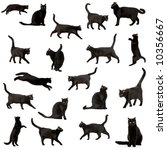 Stock photo black cat in front of a white backgroundaa 10356667